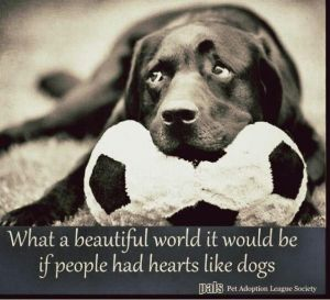 happiness dog wisdom