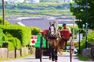 aran islands horse 2 fix