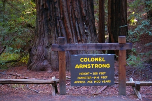 Armstrong tree