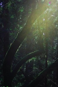 happiness, Appalachian Trails