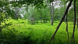 fern field