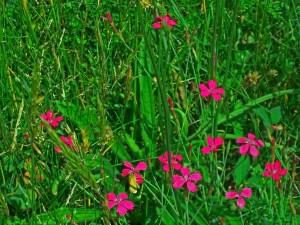 flowers 3 fix