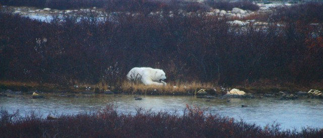 fix polar bear hotel pond 2 yawn z