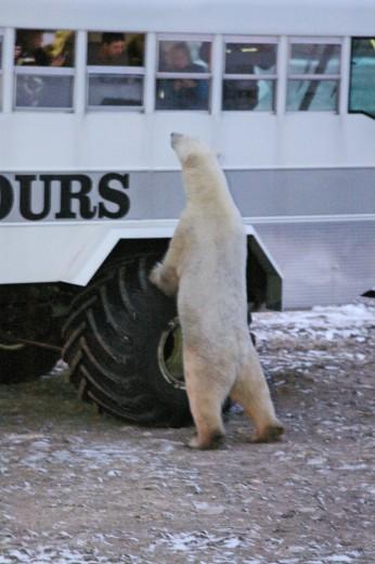 fix polar bear rover 2 port