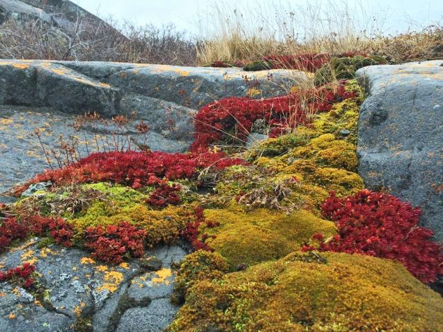 fix t lichen drew