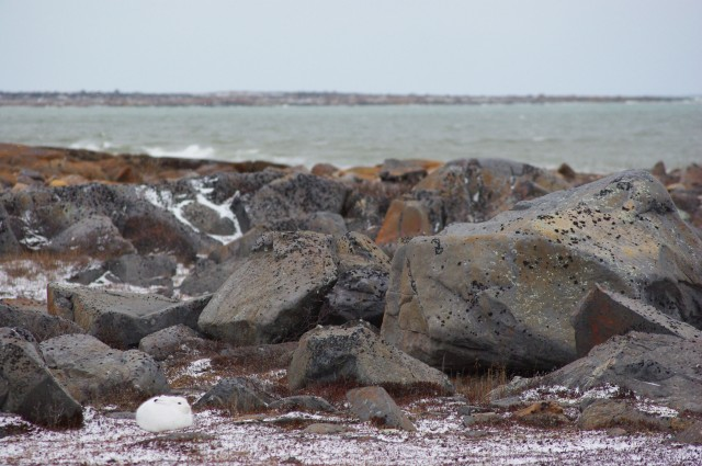 Fix arctic hare 2