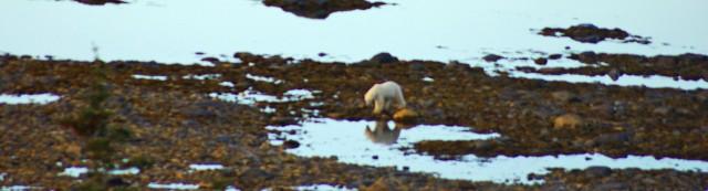 fix polar bear reflect z