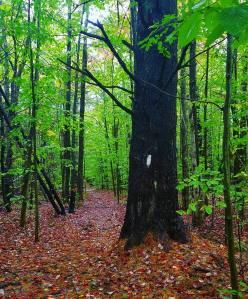 Appalachian Trail, hiking, happiness