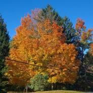 fall 13