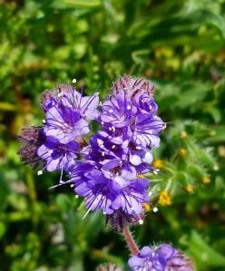 flowers, california, travel