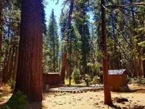 redwoods, hiking