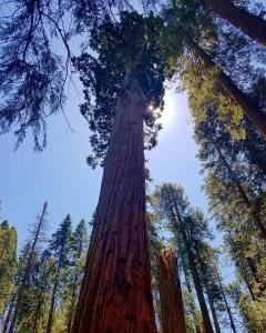 redwood tree hiking trail