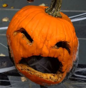 pumpkin, brooklyn